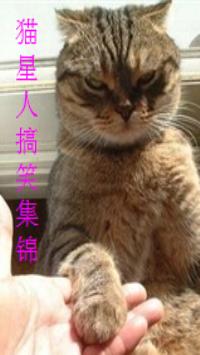 猫星人搞笑集锦