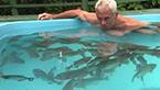 男子走进食人鱼池塘 下幕让人诧异