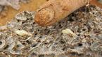 男子挖出巨型蚁穴:活捉30年蚁后