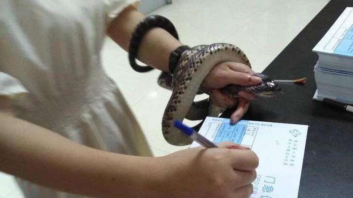 浦江一女子被蛇咬伤 抓着活蛇就医
