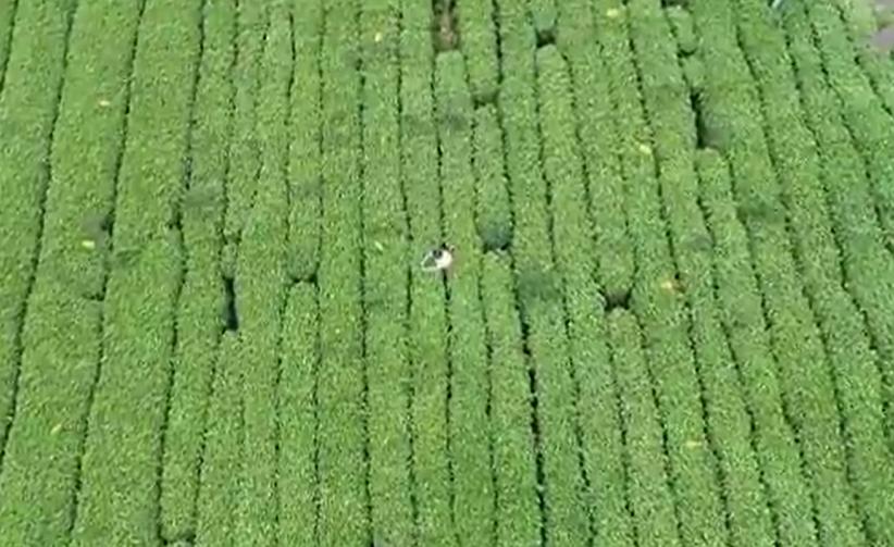 大力发展高效生态农业 我省各界深入学习采访实录 《习近平在浙江》