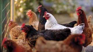 国家畜禽遗传资源目录