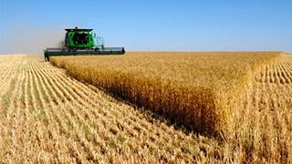 2020年夏粮生产收购